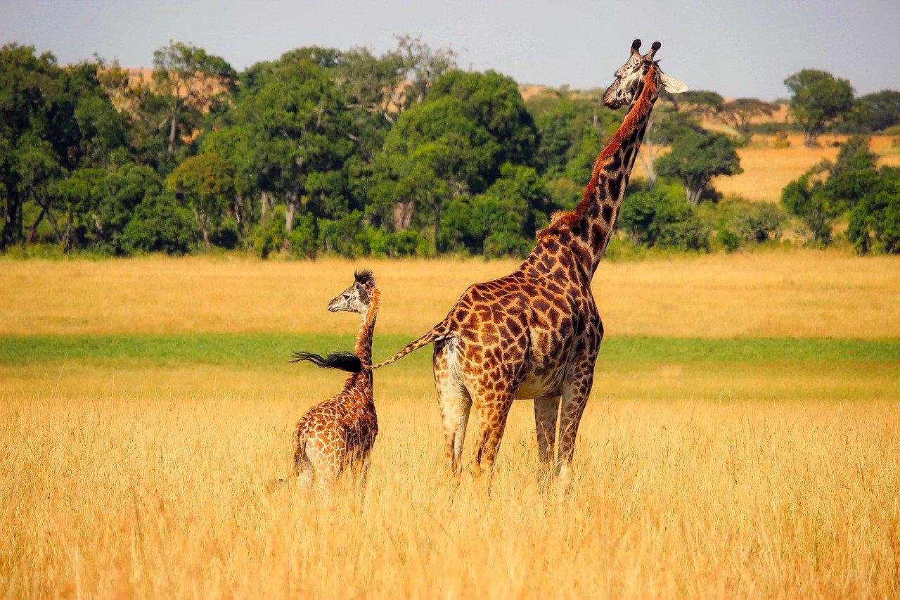 meilleures destinations de vacances en Afrique