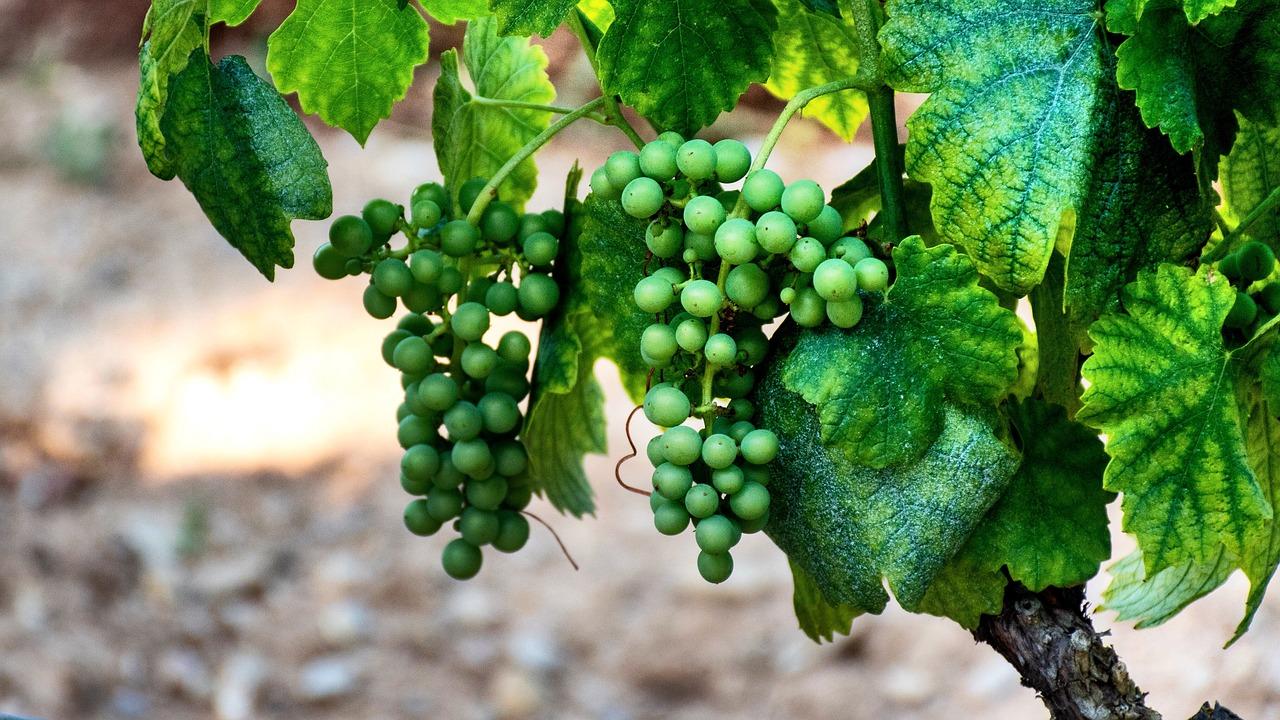 meilleurs vignobles d'Europe
